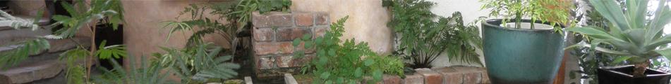 観葉植物(室内用)